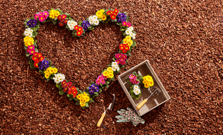 seedling: Potted flowers in pink, purple, yellow, red and white arranged in the form of a valentine heart next to gardening tools over brown wood chip background