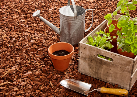 Pflanztöpfe, Kelle, Stahl Gießkanne und Holzkiste voller Keimlinge über roten Kiefernrindenmulch im Freien