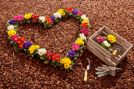 wood chip: Potted flowers in pink, purple, yellow, red and white arranged in the form of a valentine heart next to trowel, gloves and box over brown wood chip background