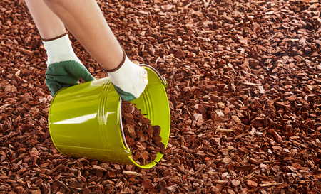 Unidentifiable arms of gardener in rubber coated cloth gloves holding green metal bucket while spreading red wood chip mulch on ground Stockfoto