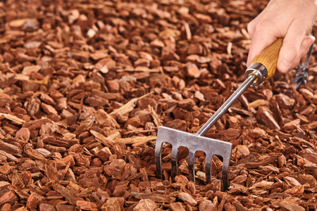 garden center: Close up of single hand rake used by unidentifiable person to spread pine bark mulch pieces for garden Stock Photo