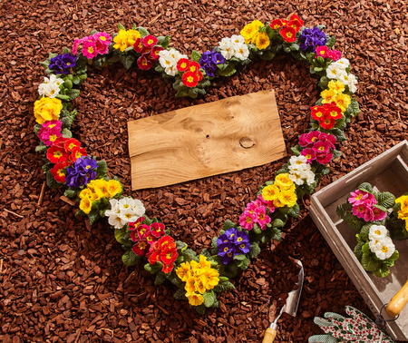 bark mulch: Purple, yellow, red, purple and white primrose seedlings in heart shape with copy space over wooden board next to gardening tools and crate
