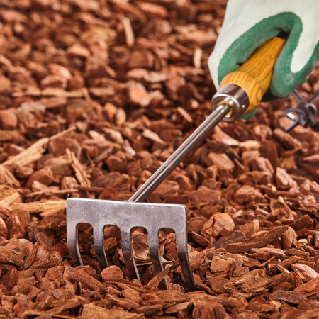 Single gloved hand holding small wooden and metal rake over brown wood chip mulch pile outdoors