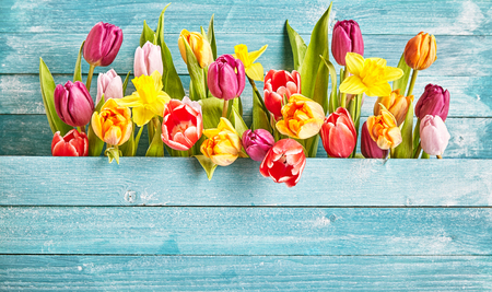 Tulip border with copy space on turquoise wooden background plate for design concepts in seasonal spring time.