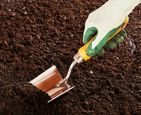 dig: Close up on rubber and cloth gloved hand using steel trowel to dig into bare soil garden Stock Photo