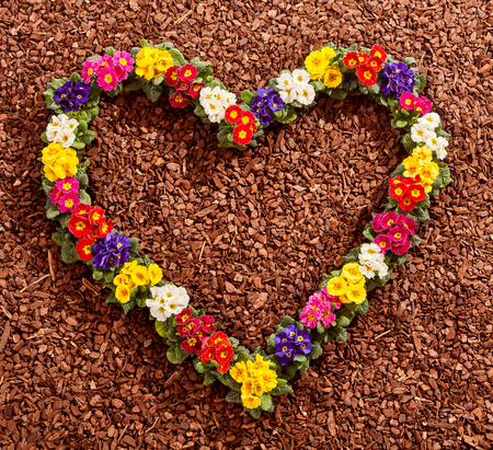 Little colorful potted flowers in pink, purple, yellow, red and white arranged in the form of a valentine heart over brown wood chip background Stock Photo