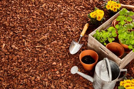 Pflanztöpfe, Kelle, Stahl Gießkanne und Holzkiste voller Keimlinge über roten Kiefernrindenmulch mit Kopie Platz im Freien