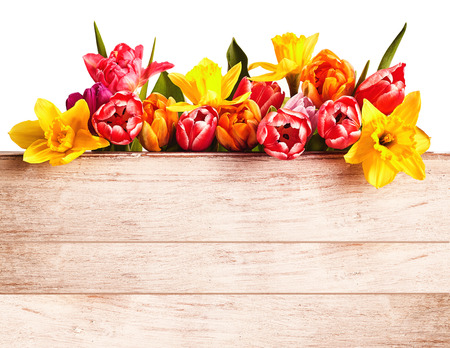Colorful fresh spring flowers forming a seasonal border isolated on white above a rustic natural wood panel with copy space Stockfoto