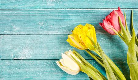 素朴な淡いブルー グリーン板コーナーに配置された白、黄色、赤の 3 つのチューリップとコピー スペースと新鮮な春チューリップ背景