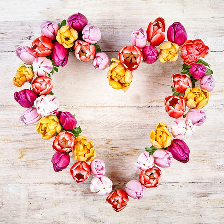 Flower heart on wood white background. Tulips in a row heart shaped for springtime concepts