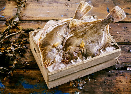 Two freshly caught flatfish, either halibut, flounder or sole, displayed in a small wooden crate of ice with fresh kelp seaweed alongside on an old rustic wooden table or floor Фото со стока