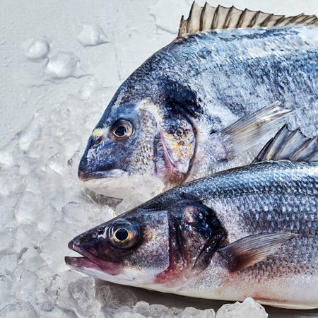 gilthead bream: Fresh raw gilt-head bream or dorade and loup de mer or Mediterranean sea bass, chilled over ice for freshness, close up overhead on their heads