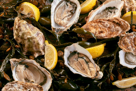 flavoring: Fresh shucked oysters on a bed of kelp served with lemon wedges for flavoring in a closeup overhead full frame view Stock Photo