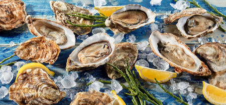 shucked: Buffet of fresh shucked oysters on ice with green seaweed shoots and wedges of tangy lemon for flavoring, high angle, full frame view