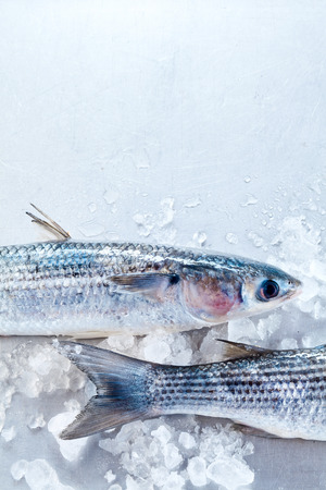 grey mullet: Cropped close up view of front and dorsal sections of grey mullet fish on ice with copy space Stock Photo