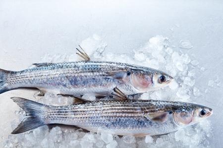 fischerei: Draufsicht auf Seitenteile von ganzen rohen Äsche Fisch auf Eis mit weißen Kopie Raum über ihnen