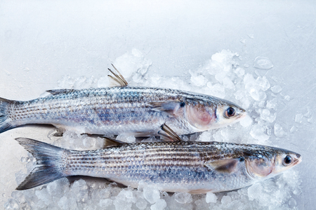 grey mullet: Top down view of side sections of whole raw grey mullet fish on ice with white copy space above them