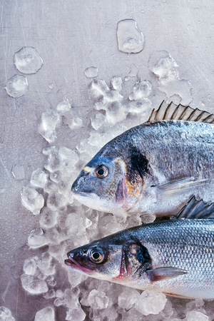 gilthead bream: Two fresh uncooked fish - a dorade or gilt-head bream and loup de mer, or Mediterranean sea bass, on crushed ice for freshness ready to be prepared for cooking, overhead with copy space Stock Photo