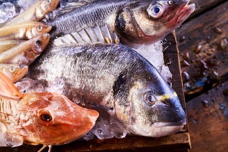 gilthead bream: Assorted fresh marine fish in a crate of ice with focus to the heads of a red gurnard and dorade or gilt-head bream in the foreground