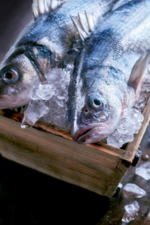 be prepared: Fresh whole raw Mediterranean sea bass or Loup de Mer kept chilled and fresh in a crate of ice ready to be prepared for a delicious seafood meal