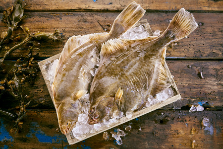 Two fresh flatfish on ice in a wooden box to preserve their freshness with strands of kelp seaweed alongside on old wooden planks, overhead view seaweed Stock Photo