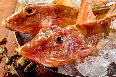 fischerei: Köpfe von zwei rohe frische rote Knurrhahn Fisch in einer Wanne mit Eis für Frische gelagert, bevor sie für das Abendessen vorbereiten