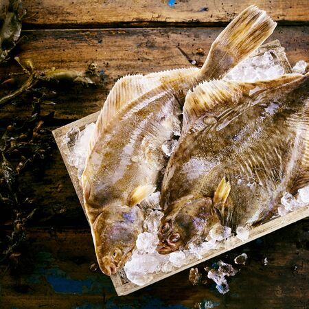 Two freshly caught flatfish, either halibut or sole, in a crate of crushed ice on a rustic wooden table with fresh kelp seaweed