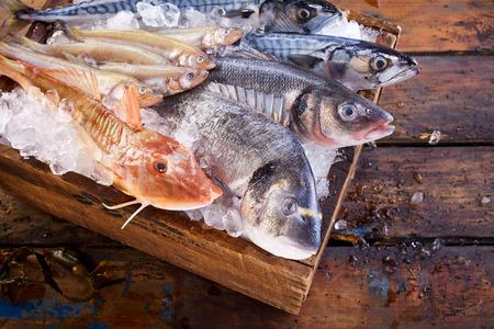 fischerei: Vielzahl von essbaren frischen Meeresfischen auf Eis auf einem Markt oder Fischerei mit Knurrhahn, Dorade, Makrele, Meeräsche und loup de mer von oben mit Fokus auf die Dorade oder Goldbrasse angesehen