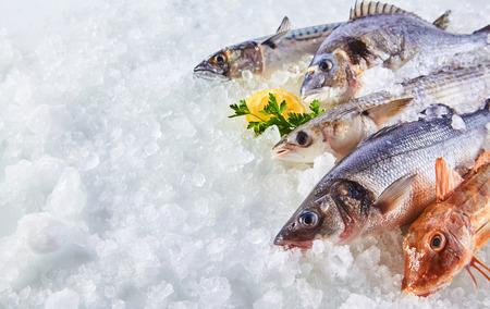 Elevada Todavía vida de la variedad de pescado fresco crudo Chilling en la cama de hielo frío en los mariscos Puesto de mercado con el espacio de la copia Foto de archivo