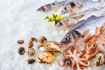 fischerei: Erhöhte Stillleben der Vielzahl von Raw frischem Fisch und Meeresfrüchten Chilling auf dem Bett von Cold Ice in Meeresfrüchte Marktstand mit Textfreiraum