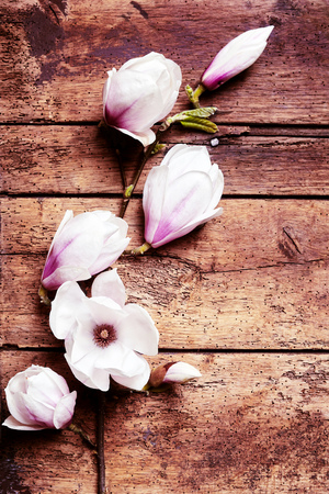 symbolics: Arrangement of fresh pink magnolias on a rustic wood background symbolic of the spring season with copy space Stock Photo