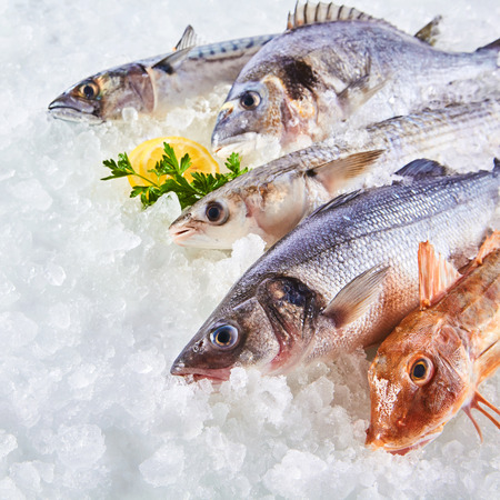 dace: High Angle Still Life of Variety of Raw Fresh Fish Chilling on Bed of Cold Ice in Seafood Market Stall with Copy Space Stock Photo