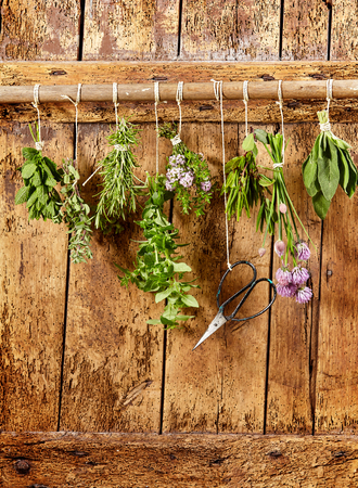 bunches: Eight bunches of different fresh culinary herbs hanging from a rail on an old wooden door with a pair of snipping scissors to harvest them, copy space below Stock Photo