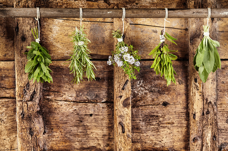 Five bunches of assorted fresh culinary herbs hanging on a rail over an old weathered rustic wooden background with copy space