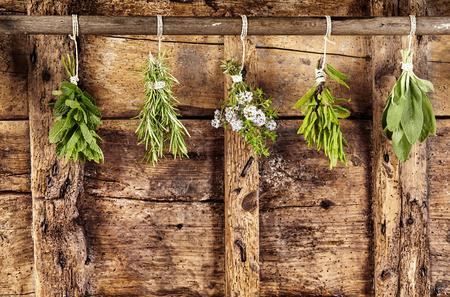 Vijf bossen van geassorteerde verse culinaire kruiden die op een spoor over een oude doorstane rustieke houten achtergrond met exemplaarruimte hangen