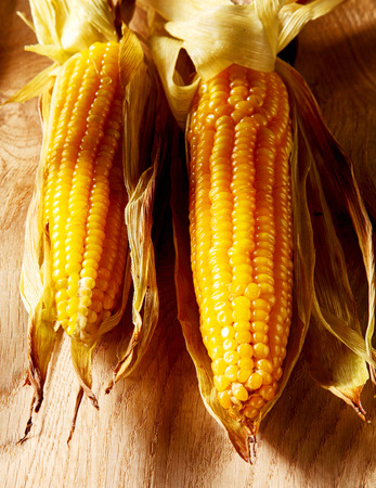 mealie: Two delicious yellow fresh grilled corn on the cob or sweet corn with their leaves peeled back to display the succulent kernels lying on a rustic wood table, high angle view