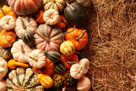 gourds: Top down view on various sizes and colors of squash gourds with copy space in hay for concept about thanksgiving or autumn themes