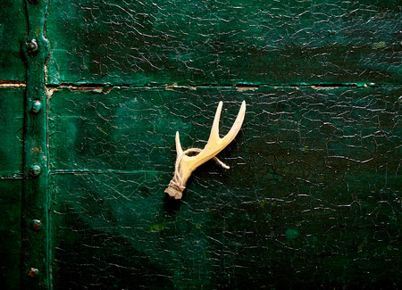 christamas: Close up on deer antler with string over dark wooden background with crackled surface Stock Photo