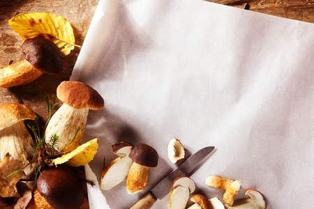 paring: Preparing freshly harvested autumn porcini or boletus mushrooms in a kitchen with a paring knife slicing them over clean white oven paper forming a corner border with copy space