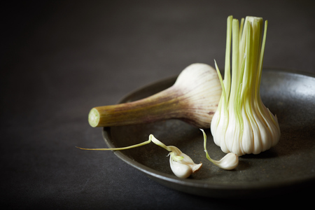 Young tender immature garlic picked in spring before the formation of the cloves and bulb for use in salads and cooking with its nutty flavor