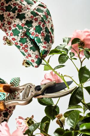 정원사 신중 하 게 전 정이 위를 사용 하여 여름 동안 장미 부시 돌보는 장갑 된 손, 도구 및 식물의보기 가까이에서 젊은 녹색 줄기를 잘라