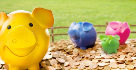 Kleurrijke spaarvarkens die zich onder muntstukken tegen het schermen en groen gras bevinden Stockfoto