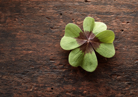 st: Lucky fresh green four leaf clover on textured rustic wood with copy space symbolic of luck, love, faith and hope in Irish tradition