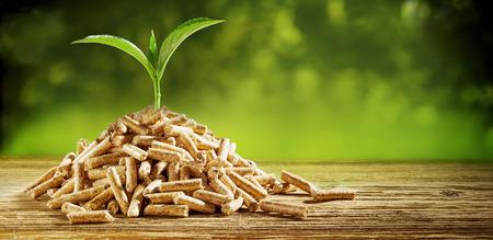 Jeune plantule poussant d'un tas de granulés de bois à l'extérieur sur un fond vert avec espace de copie conceptuel d'énergie renouvelable et de carburant