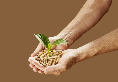 Man holding wood pellets with a young seedling sprouting from the top in a concept of renewable energy and saving the plant Stock Photo