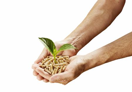 Concept de carburant et d'énergie renouvelable durable avec un homme tenant un tas de granulés de bois avec une plante verte de germination dans ses mains, isolé sur blanc