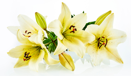 Isolated corset of yellow daylily flowers with slight shadow over white background