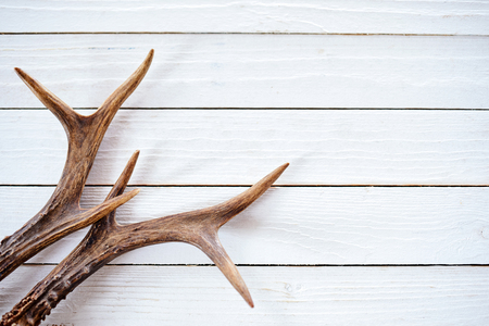elk point: A pair of stag antlers on a rustic white timber plank background with copy space.