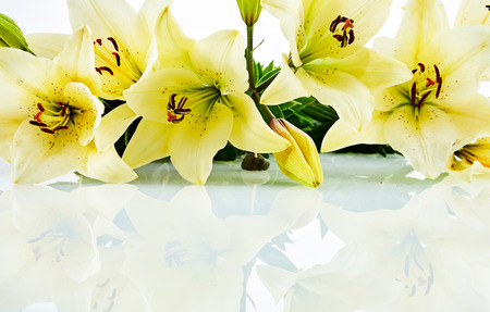 Close up on row of beautiful yellow and white daylily blooms over white background. Includes copy space. Stock fotó