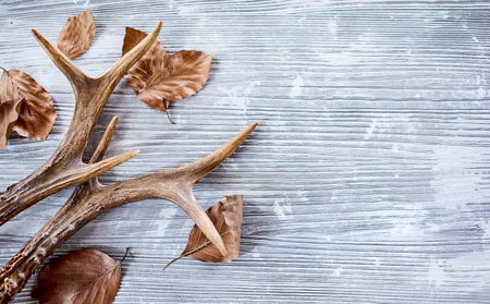 Deer antlers with dry leaves on bright wooden background